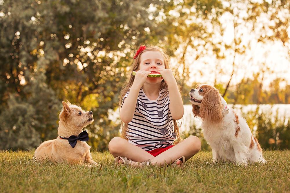 Portrait chiens âgés avec petite fille