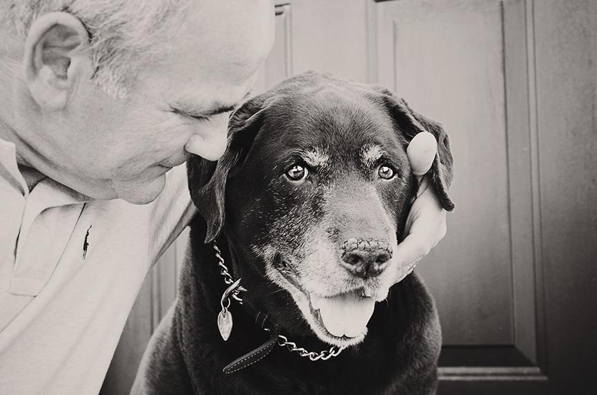Photo vieux chien labrador et son humain