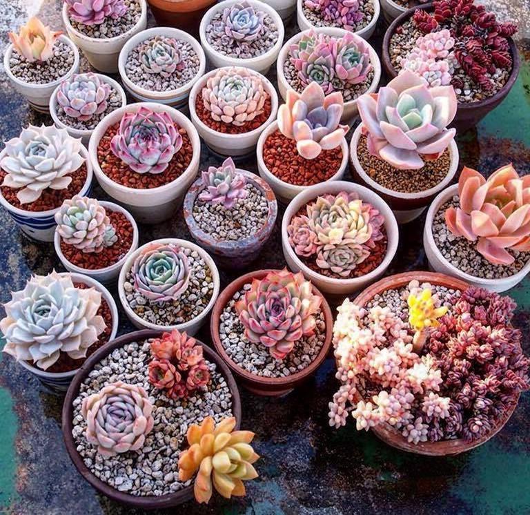 sukkulenten, zimmerpflanze, pflanze für büro