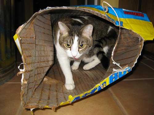 Nekko the cat in food bag