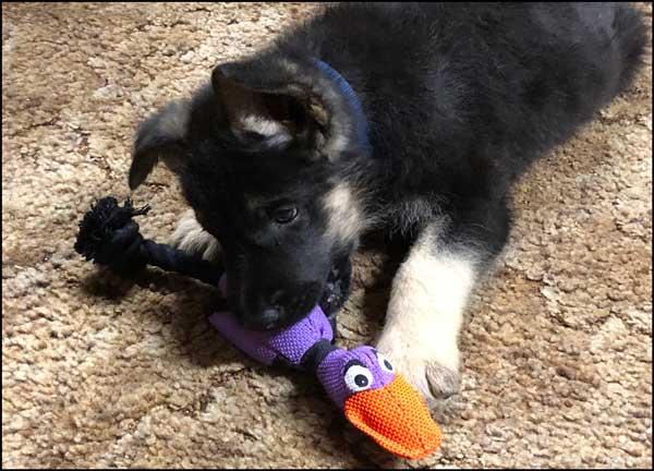 Zeus enjoys his weird duck