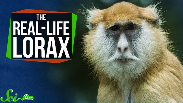 The Real Life Lorax | Surf February Season Guide