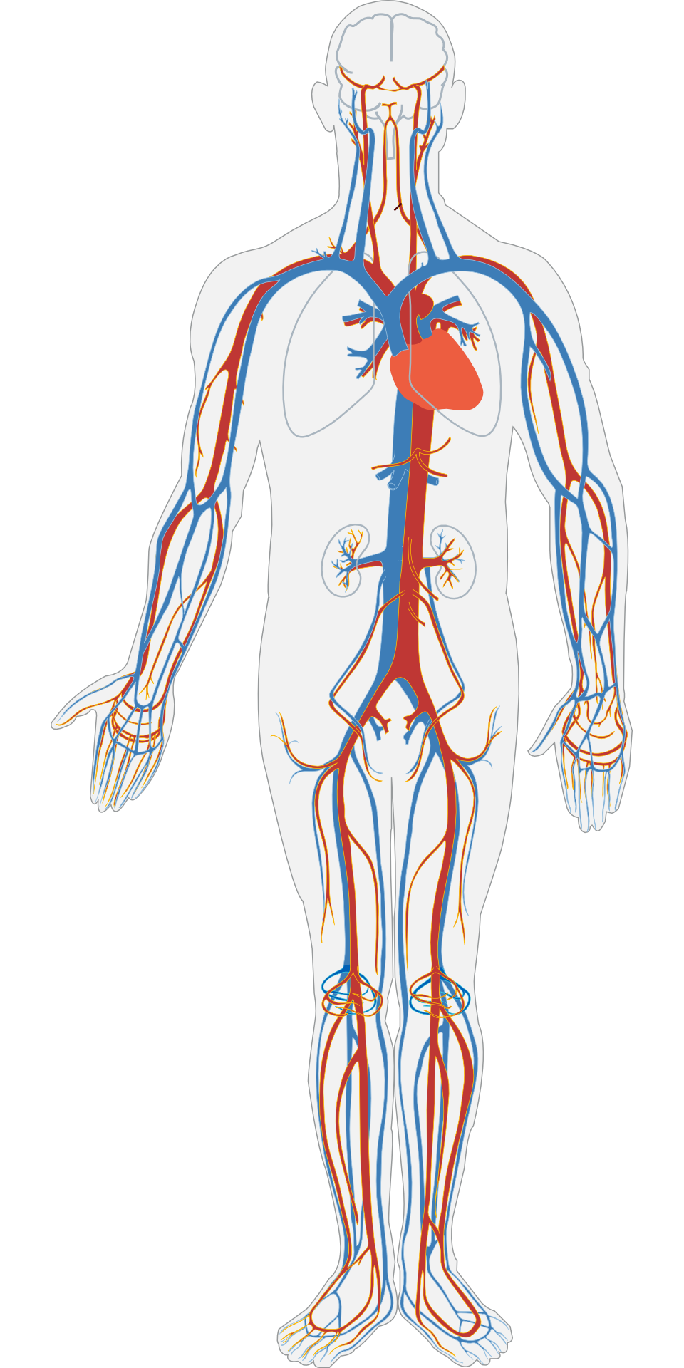 Peripheral Arterial Disease Detection, Awareness, and Treatment in Primary Care