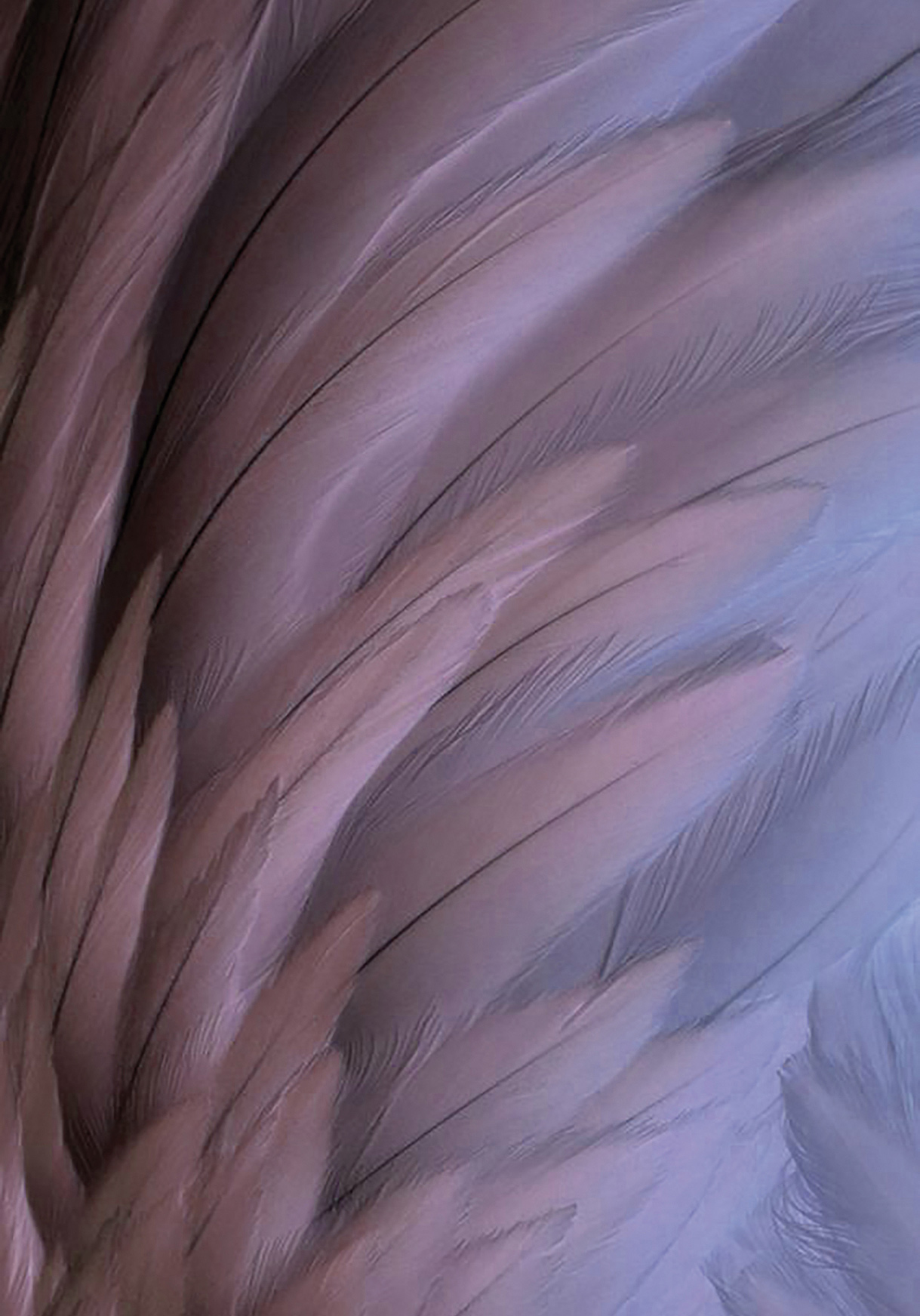 Jewels as light and graceful as the feather of an Amazonian macaw.
