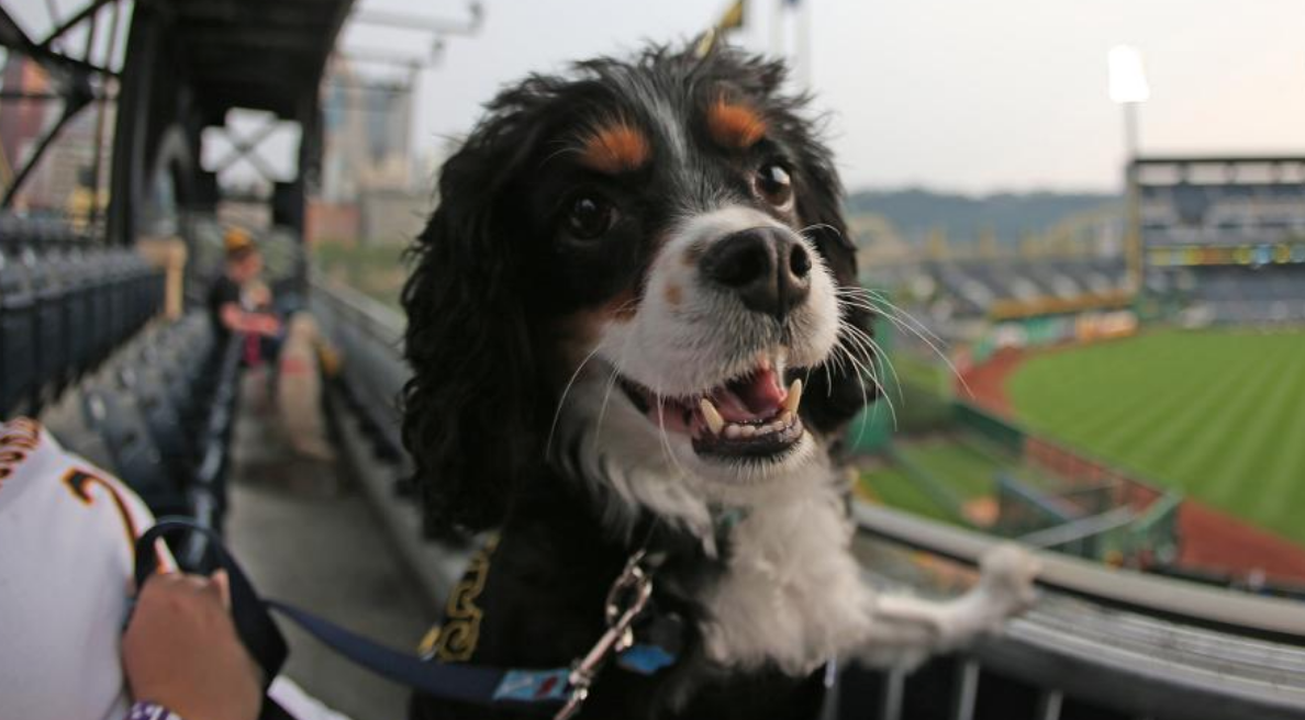 Pup nights at PNC Park
