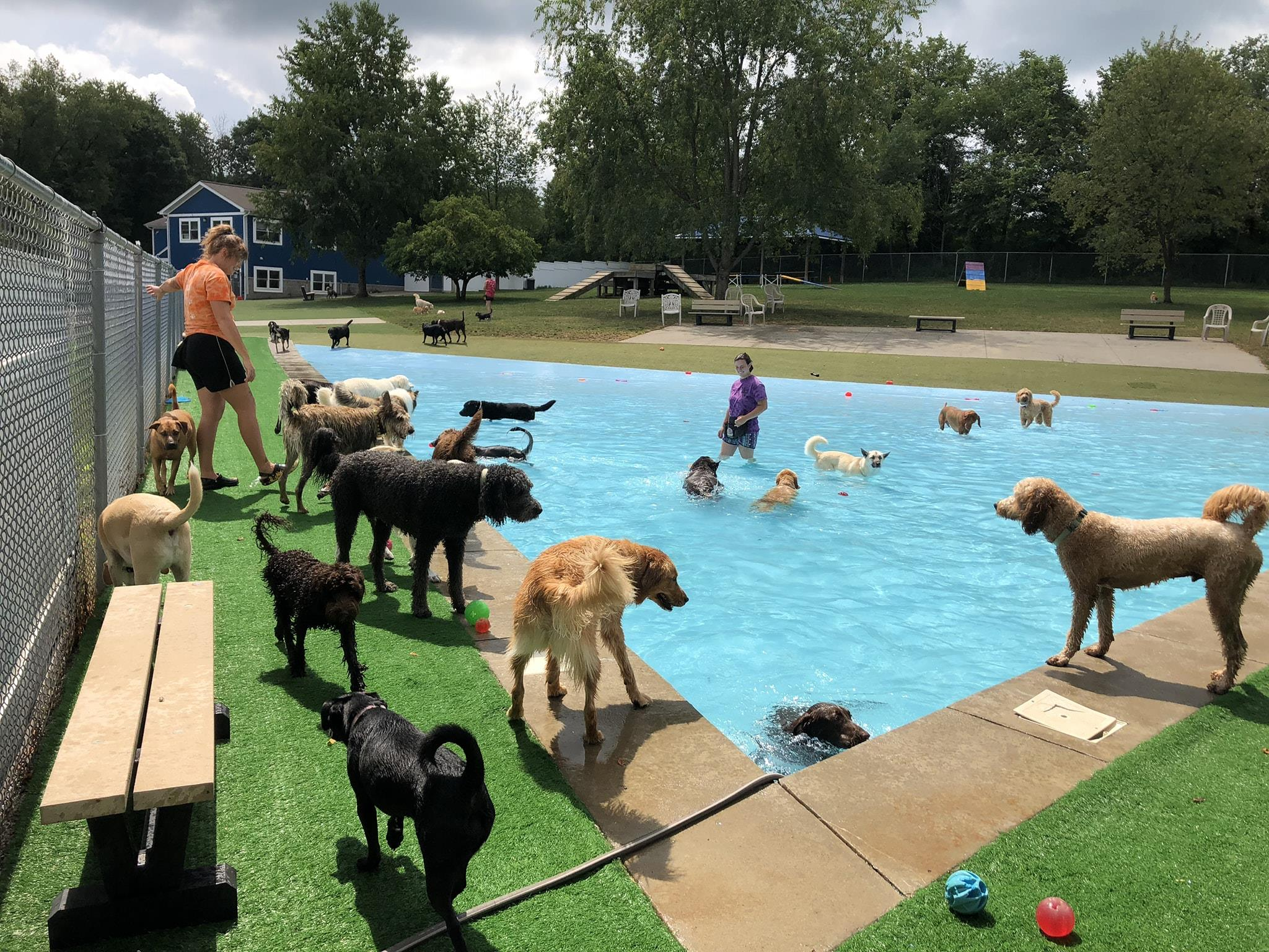 Lucky Paws Resort and Spa