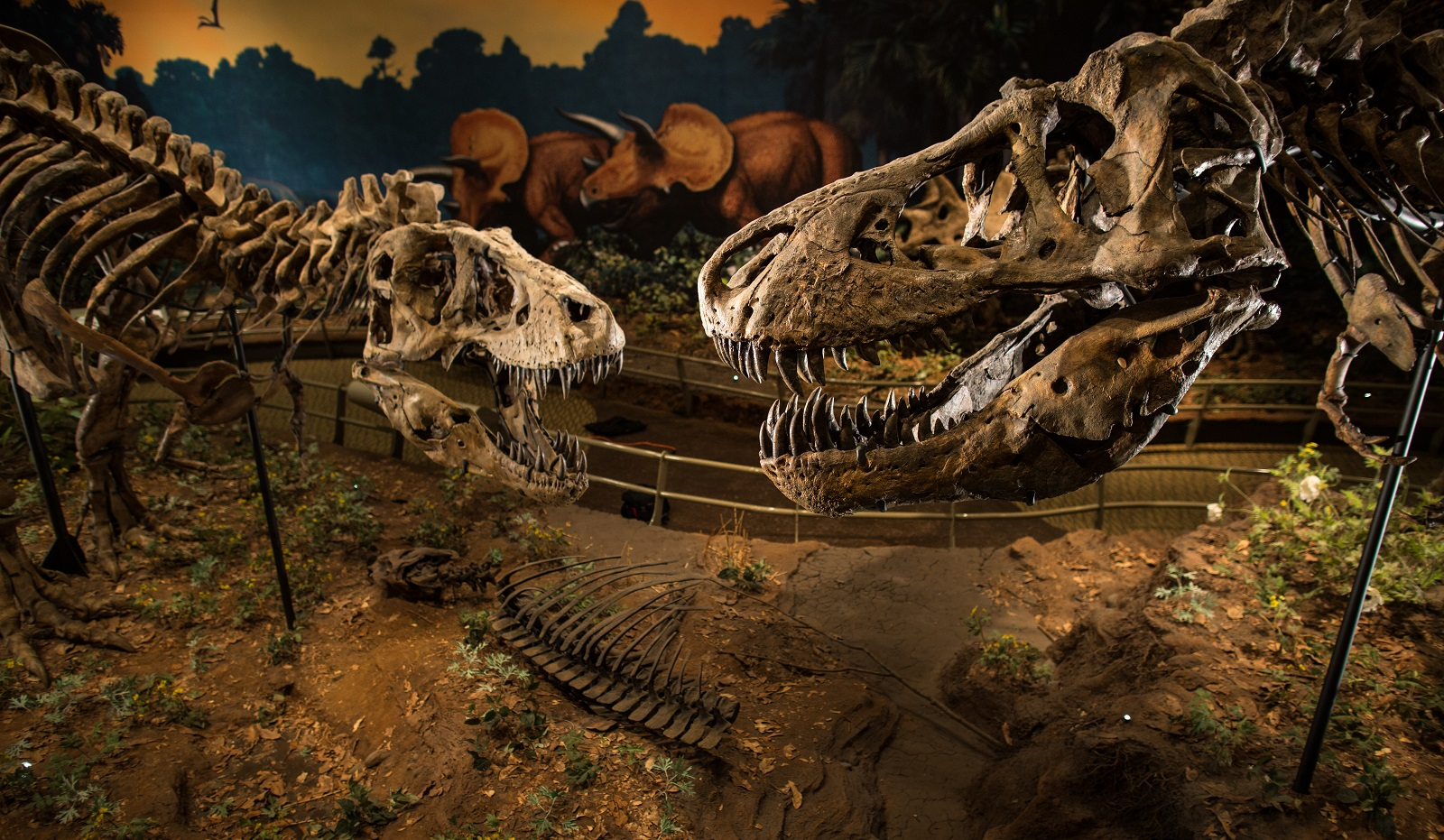 Carnegie Museum of Natural History