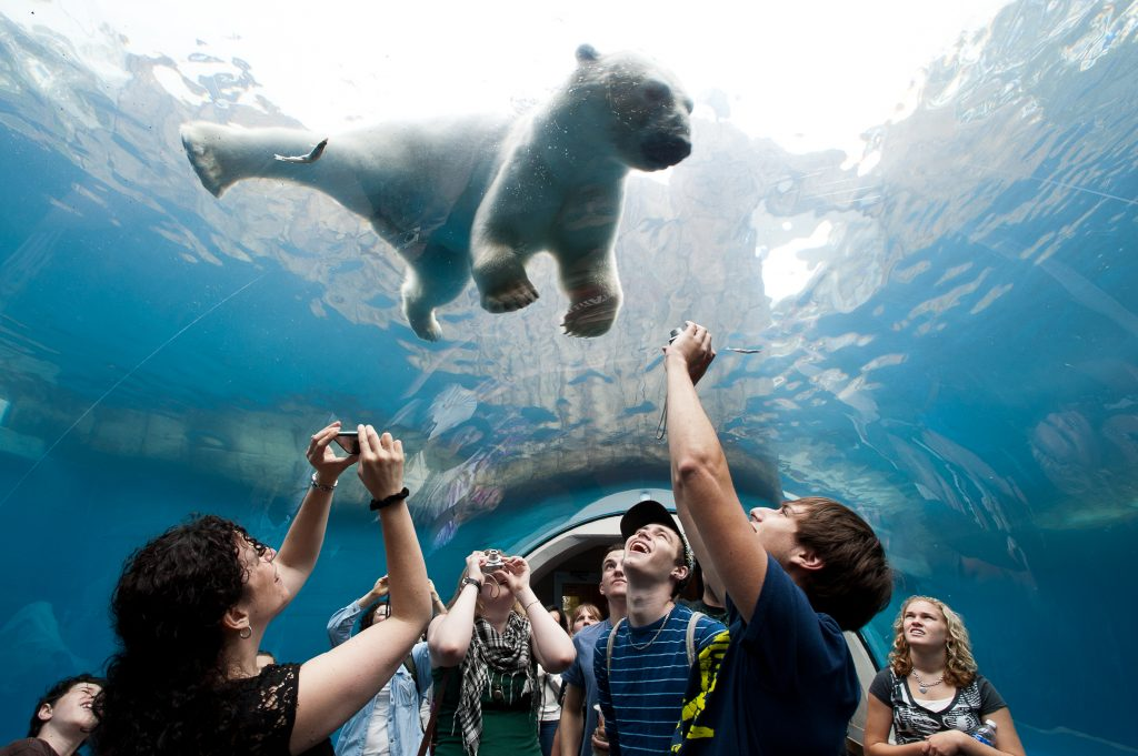 Zoo goers watch as a polar bear swims toward them at the Pittsburgh Zoo and Aquarium