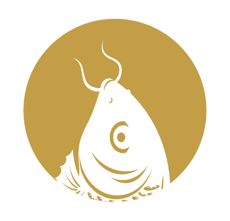 https://images.squarespace-cdn.com/content/570eb87945bf2139909d341a/1461177545477-Y6NX0EGHN8LPELHVYX3R/Gold+Fish+White+Logo+Plain-08.png?content-type=image%2Fpng
