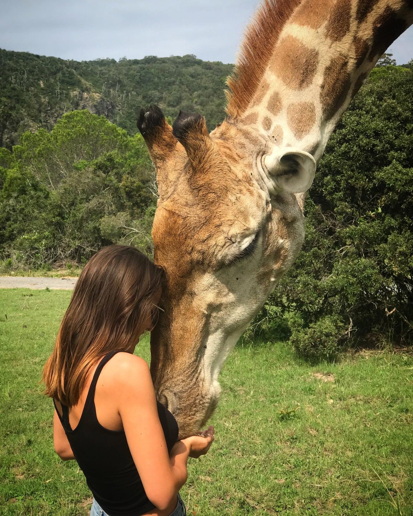 Travel the world as a veterinary nurse