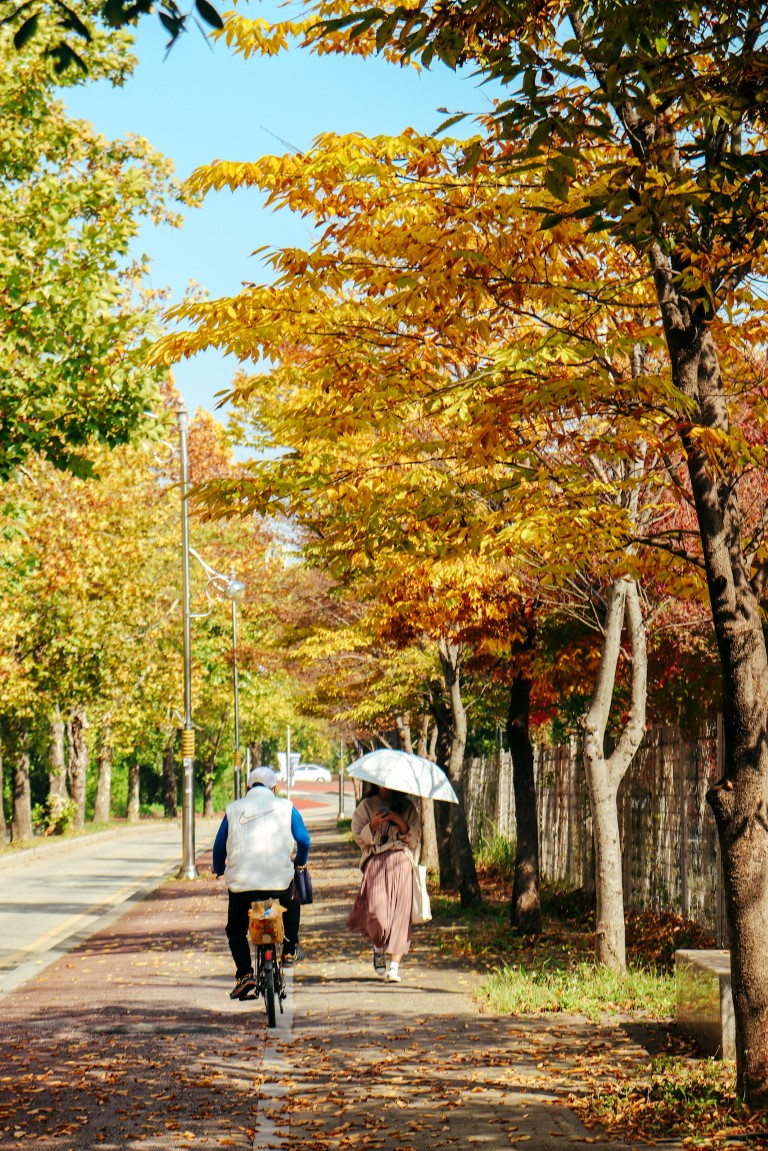 beautiful yellow and orange fall leaves in jeonju