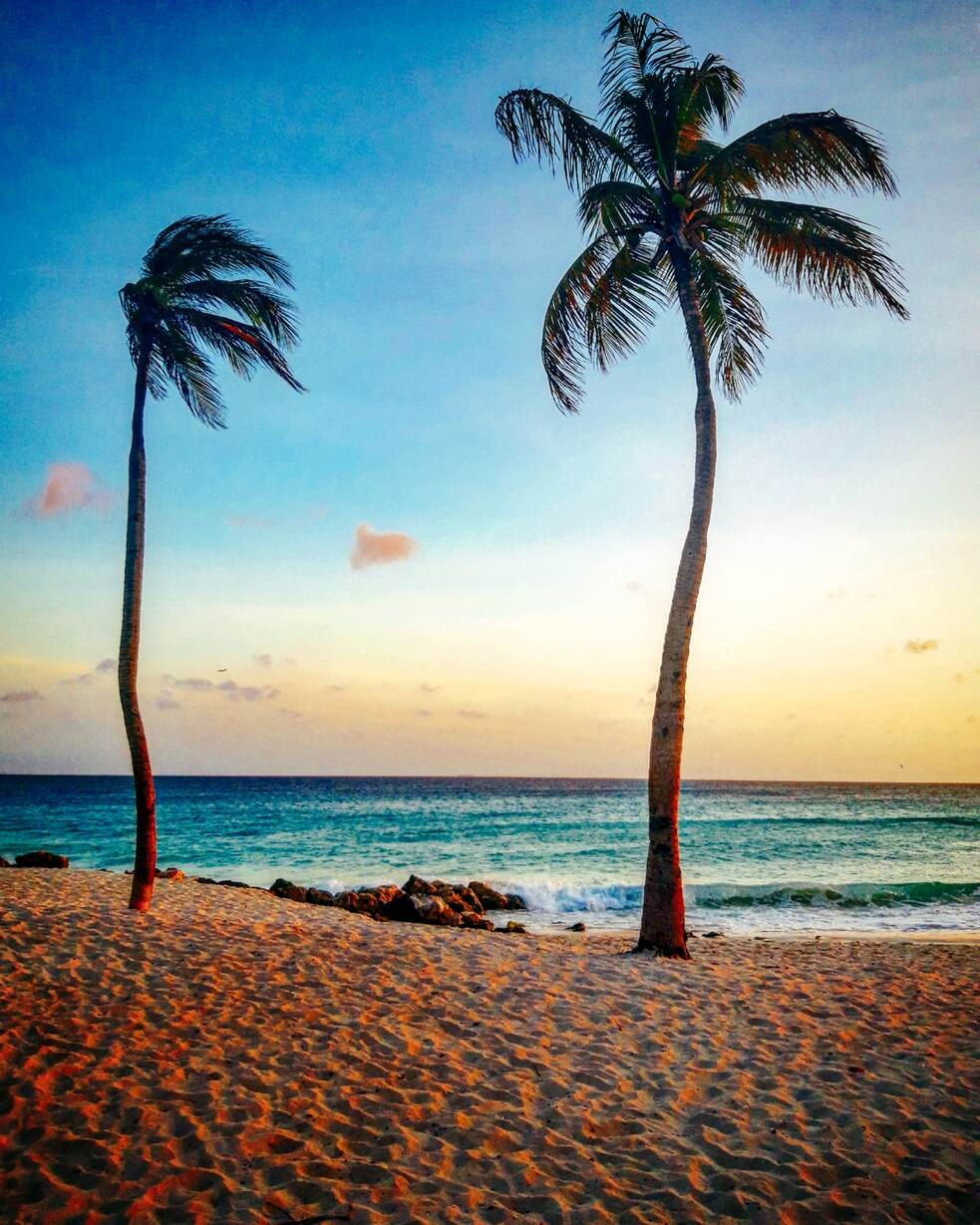 Sunset of the Caribbean sea in Aruba from the beach with 2 palm trees in the sand