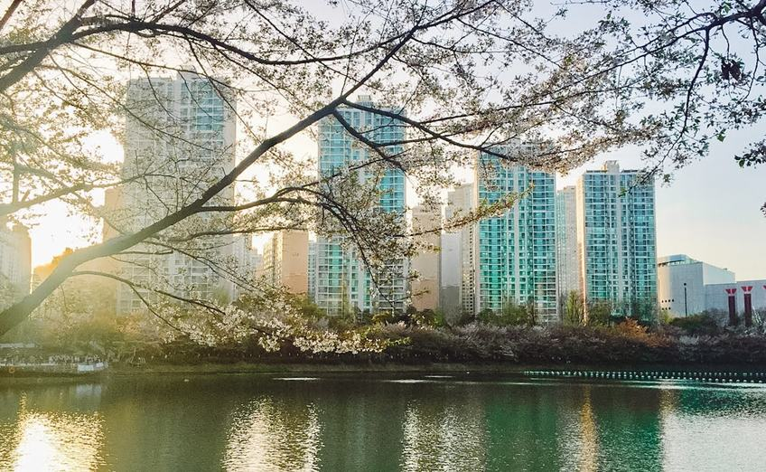 The Han River in Seoul, Korea at sunset in spring with high rise apartments and cherry blossoms