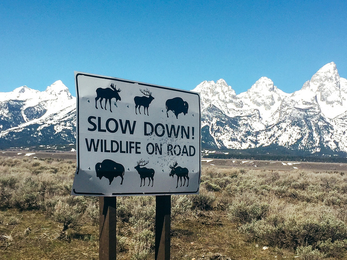 "A road side in a national park that reads, ""Slow down! Wildlife on Road"" placed in front of snowy mountains"