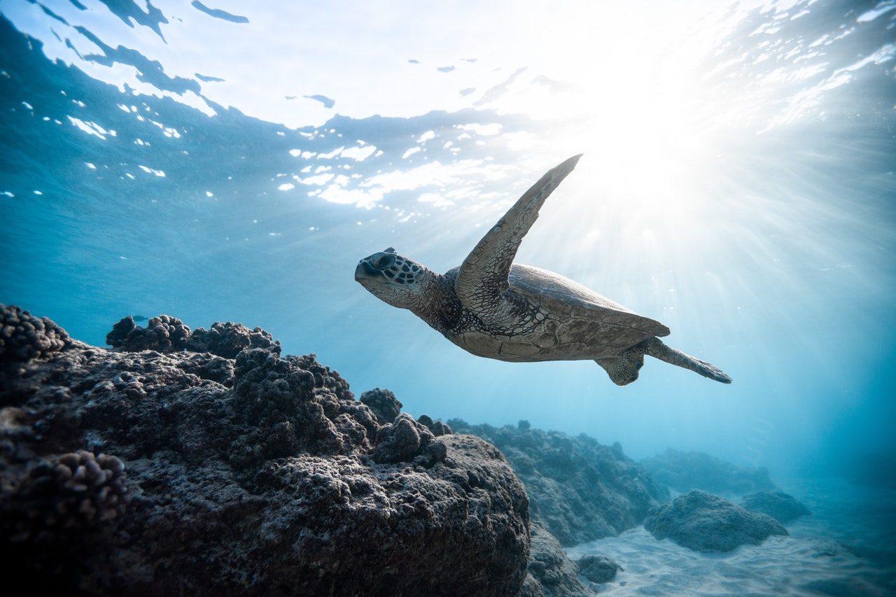 an underwater picture of a turtle swimming near the shore