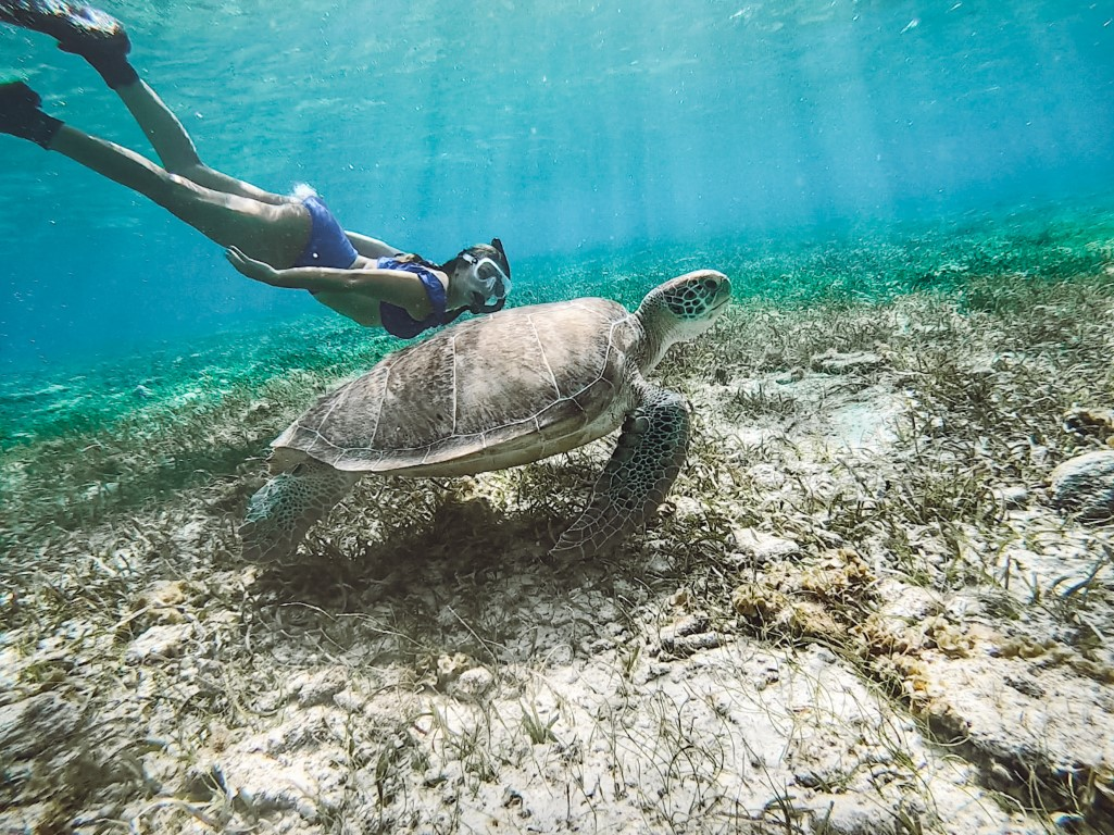 A girl snorkeling with a big sea turtle on Grand Cayman