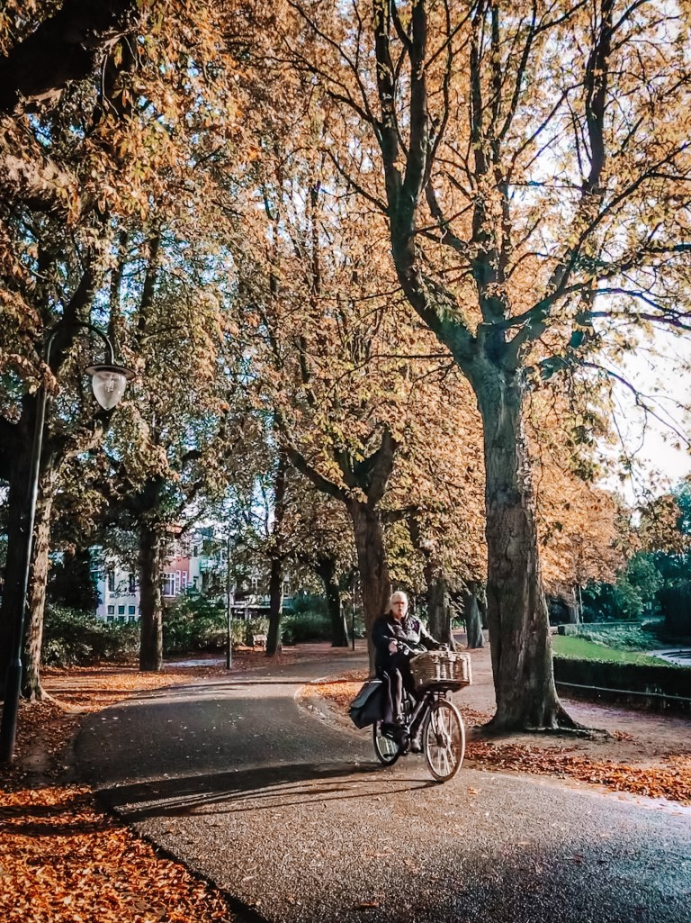 A beautiful autumn day in Groningen. The leaves on the trees are all orange and yellow with a man biking through a small path