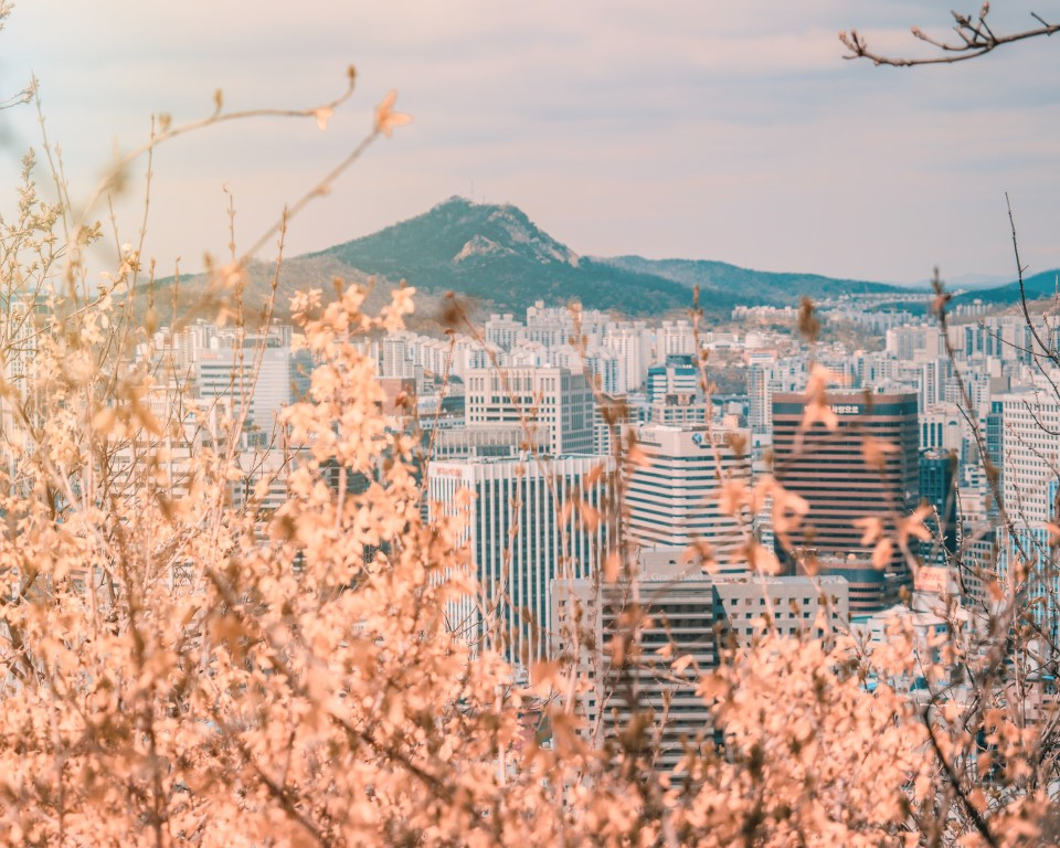 A view of Seoul through the branches of cherry blossom trees