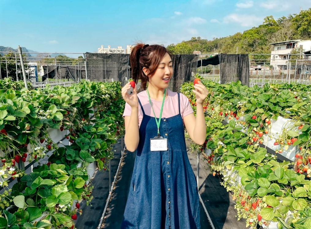 A female student in Taiwan picking strawberries on a class trip