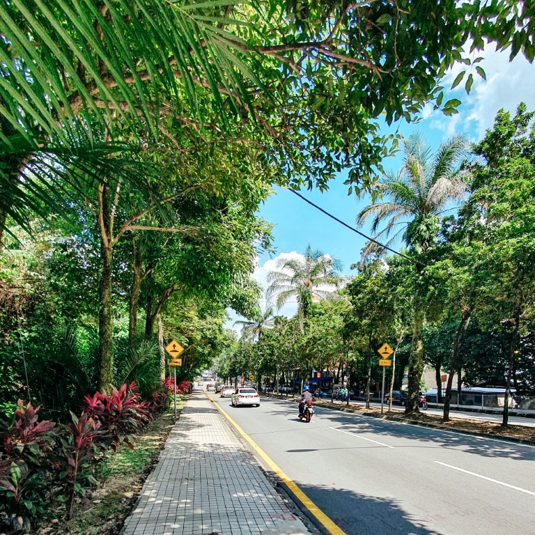 a street in Bangsar South, KL, on a sunny day with bright green trees lining the street