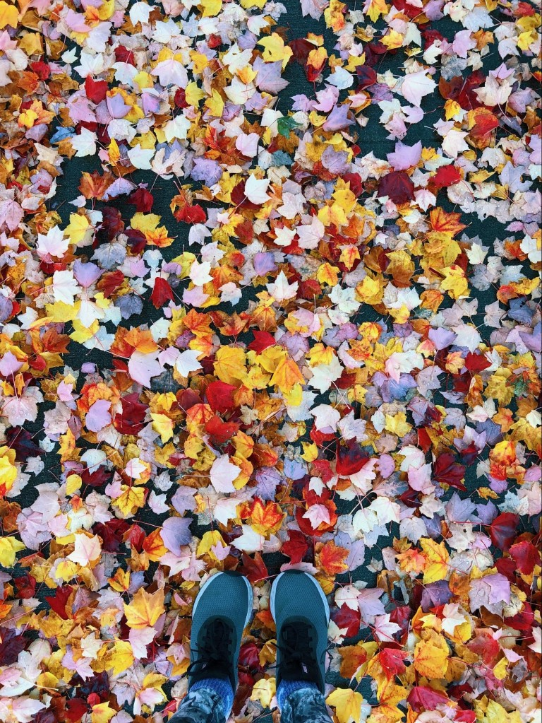 overhead view of tennis shoes standing on red and yellow leaves in fall in Seattle