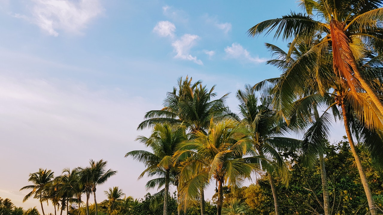 a view of the tops of palm trees against a blue sky
