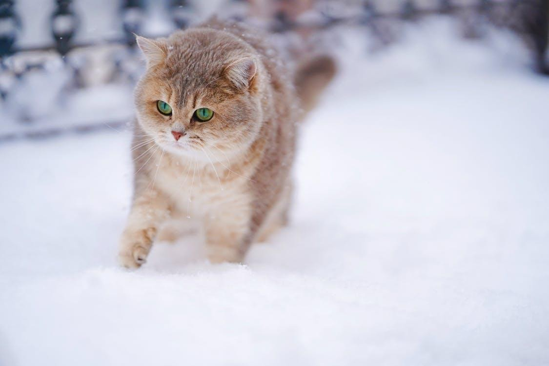 Cat On Snow Covered Ground
