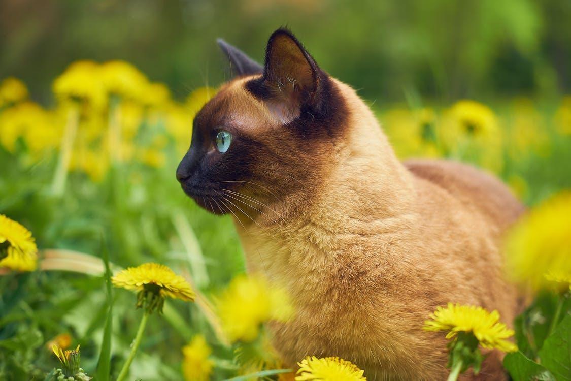 Photo of Cat in a Flower Field.