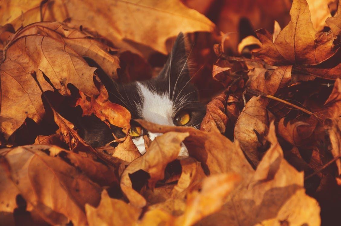 Cat Behind Leaves