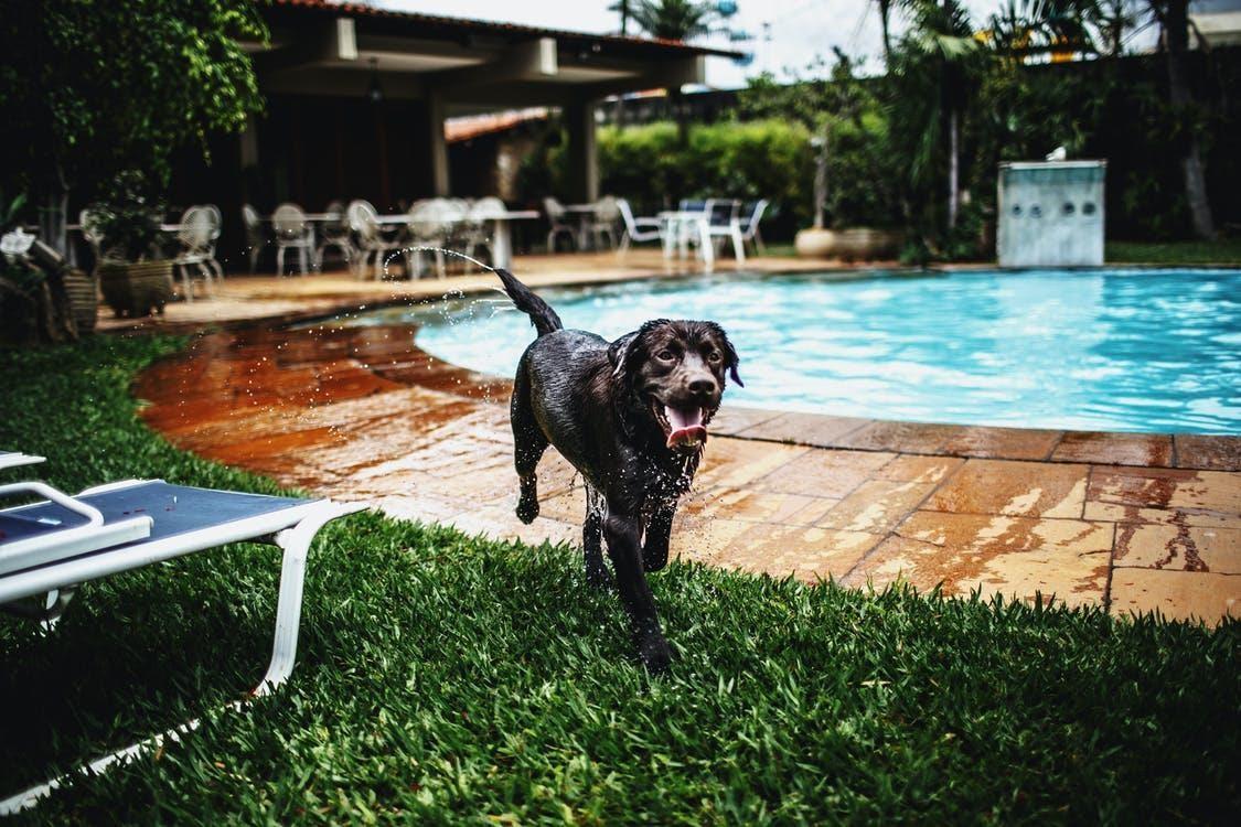 Black Wet Dog Near Pool