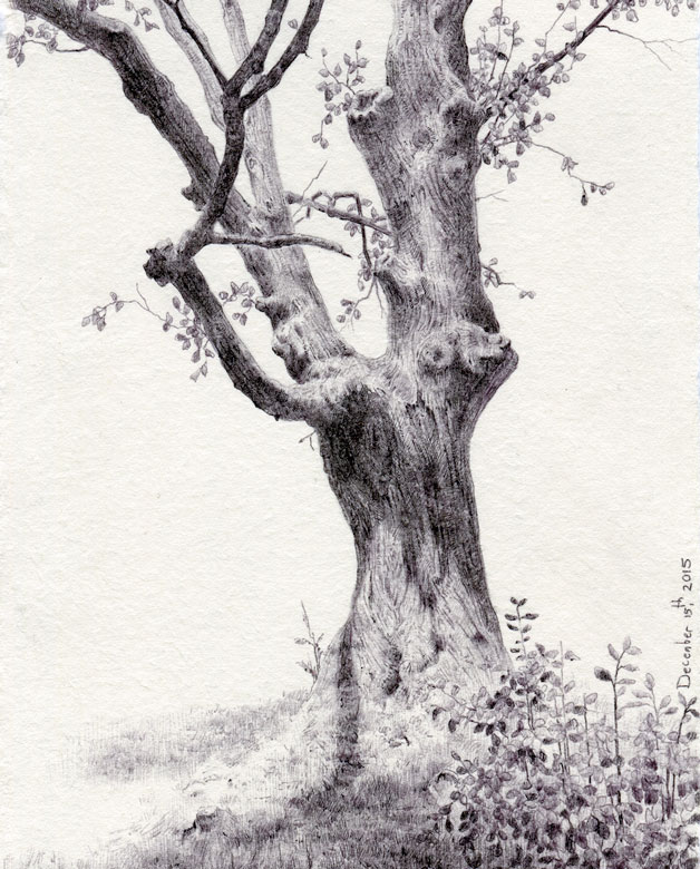Drawing of a gnarled tree by Dina Brodsky