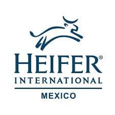 Heifer Mexico
