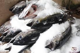 bị hắc lào kiêng hải sản