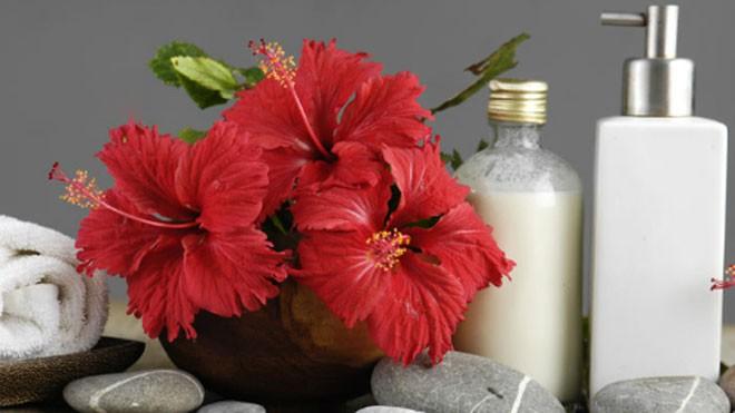 hoa dâm bụt trị hói