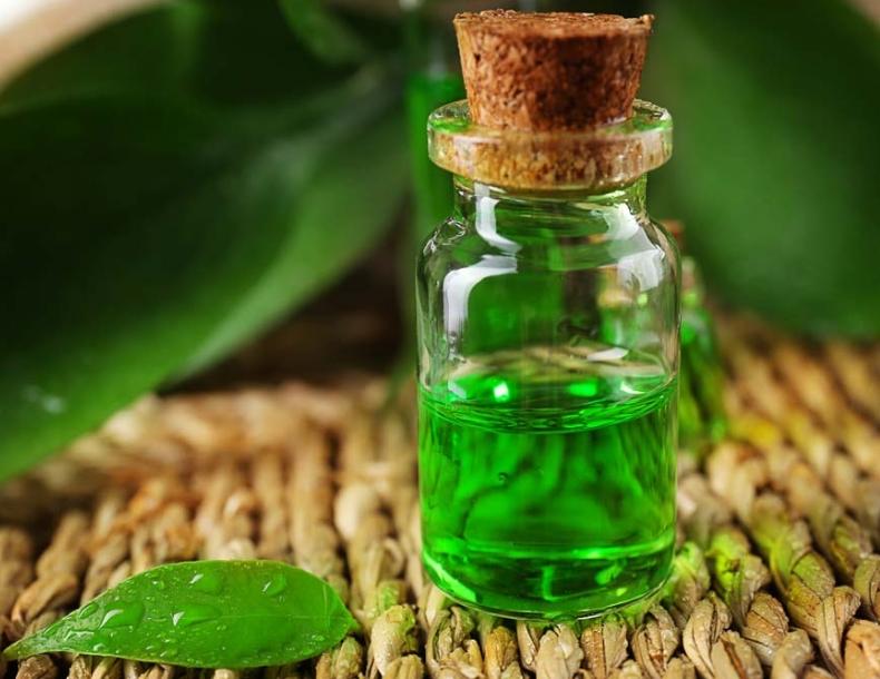 Tinh dầu cây chè chữa bệnh lang ben