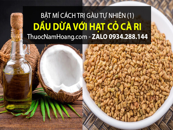 trị gàu bằng cỏ dầu dừa và cỏ cà ri