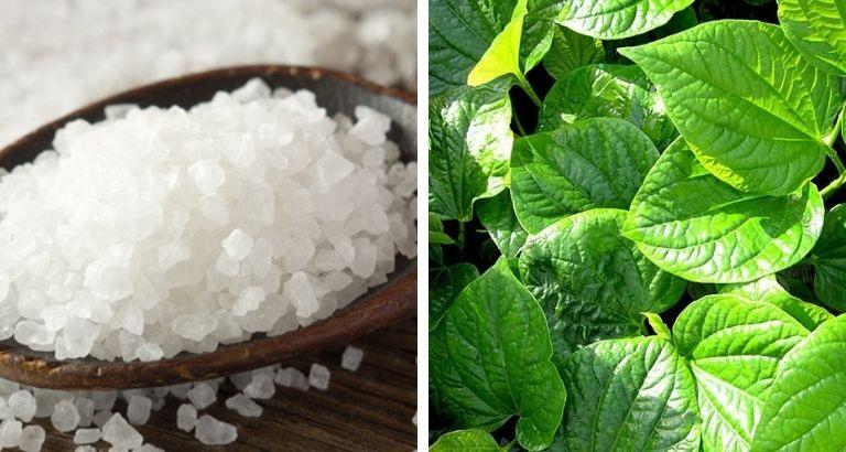 cách chữa tổ đỉa bằng muối và là lốt