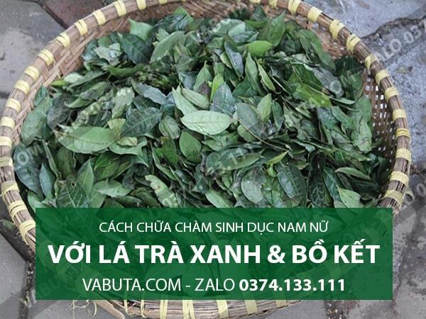 chữa chàm sinh dục bằng lá trà xanh