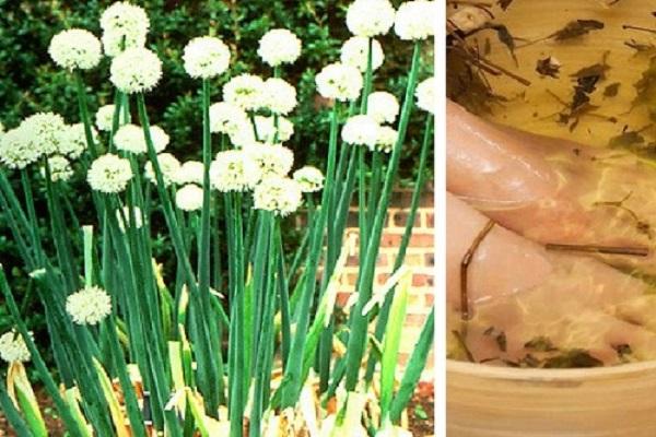 Dùng Hành hoa điều trị chàm