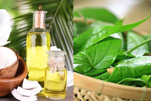 cách trị chàm sữa bằng lá trầu không và dầu dừa