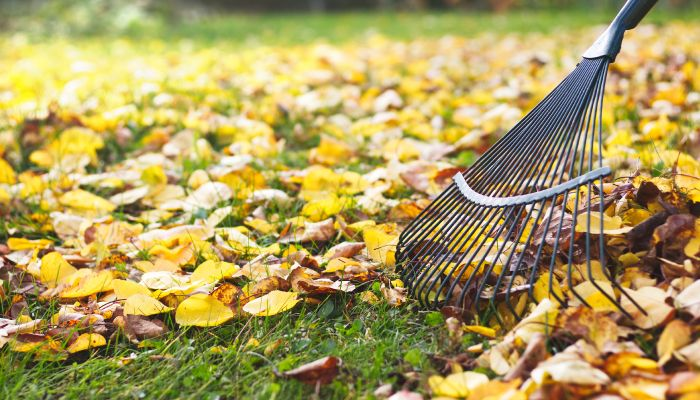fall clean up in toronto