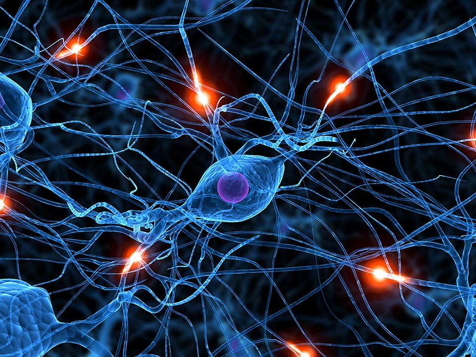 A rendering of synapses and neurons