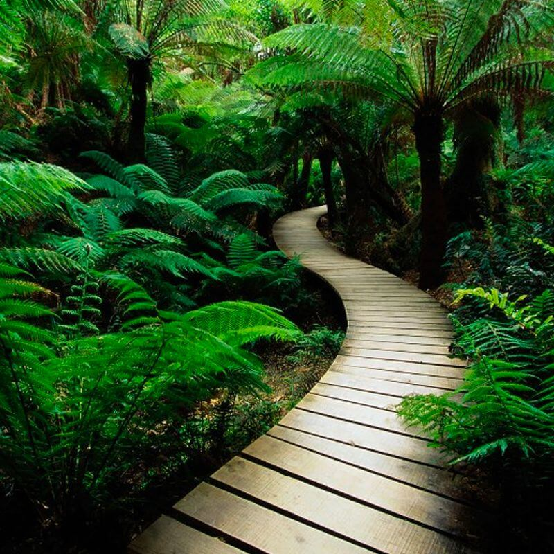 A wooden path meanders through the woods