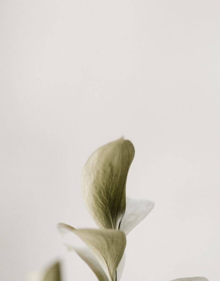 Photo zoomée d'une feuille de plante verte