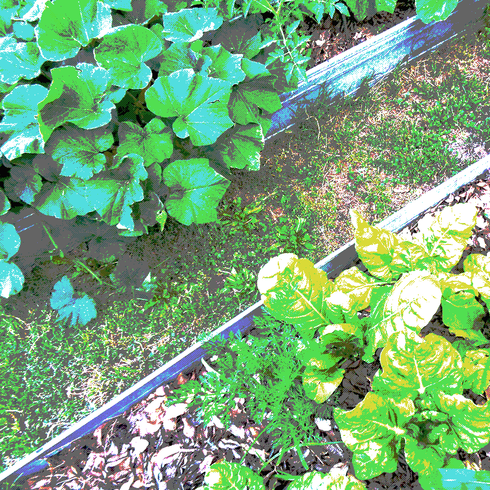 Small Potion - Raised beds, leafy vegetables