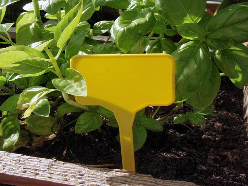 Accessoires de plantesPlanta