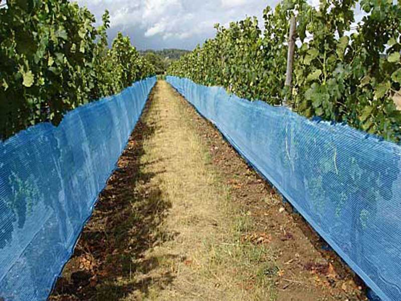 Vinea Filet Viticulture