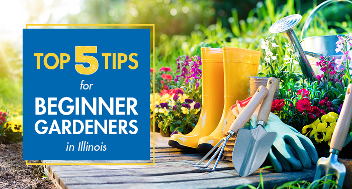 Top 5 Tips for Beginner Gardeners in Illinois