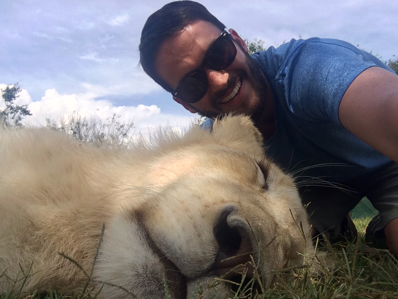 Lion selfie | Photo by Wilson Carletti (All Rights Reserved)