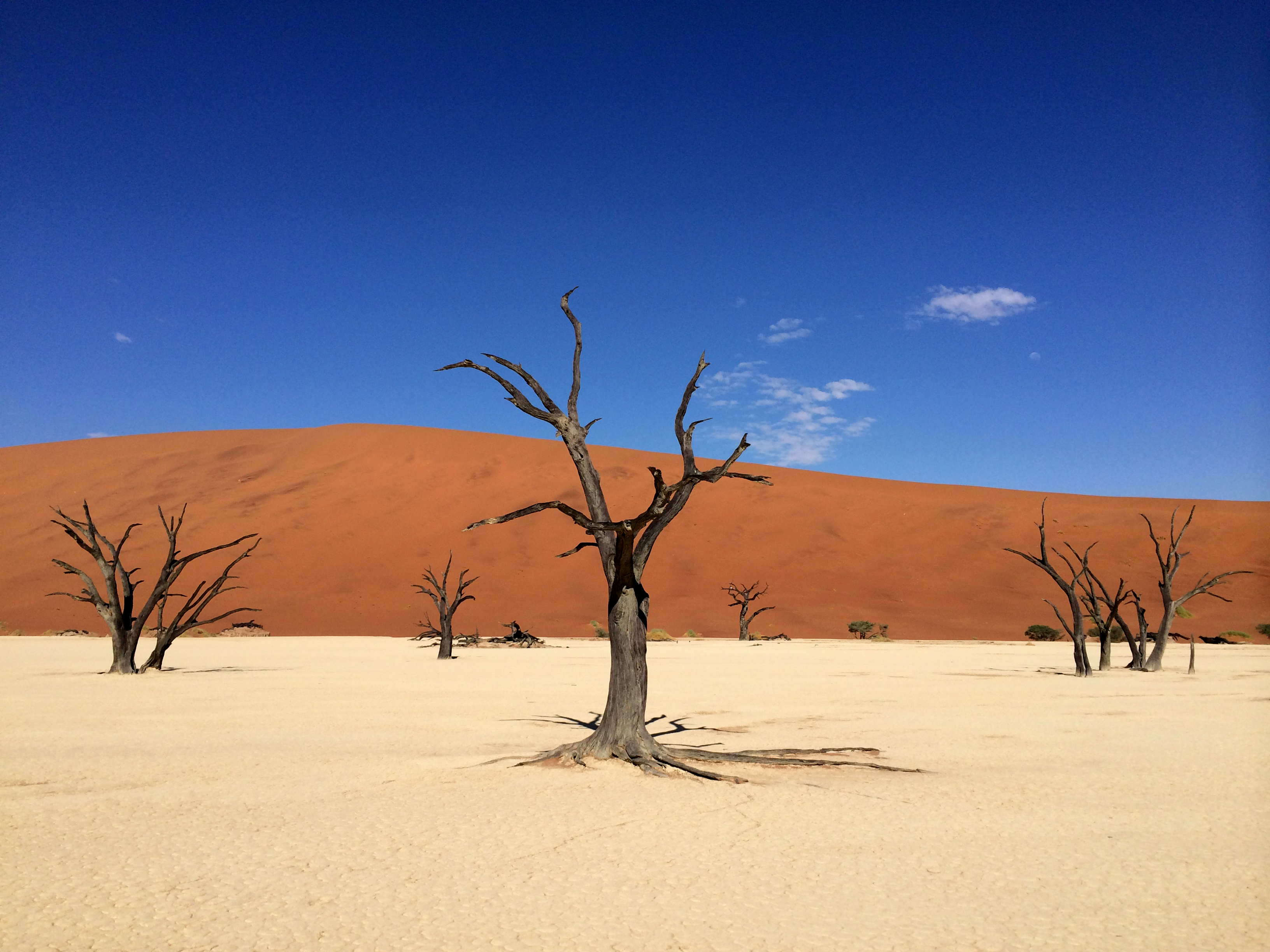 Deadvlei | Photo by Wilson Carletti (All Rights Reserved)